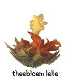 Theebloem Lelie_
