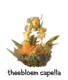 12 Theebloem Capella 2019_