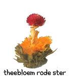 theebloem Rode Ster